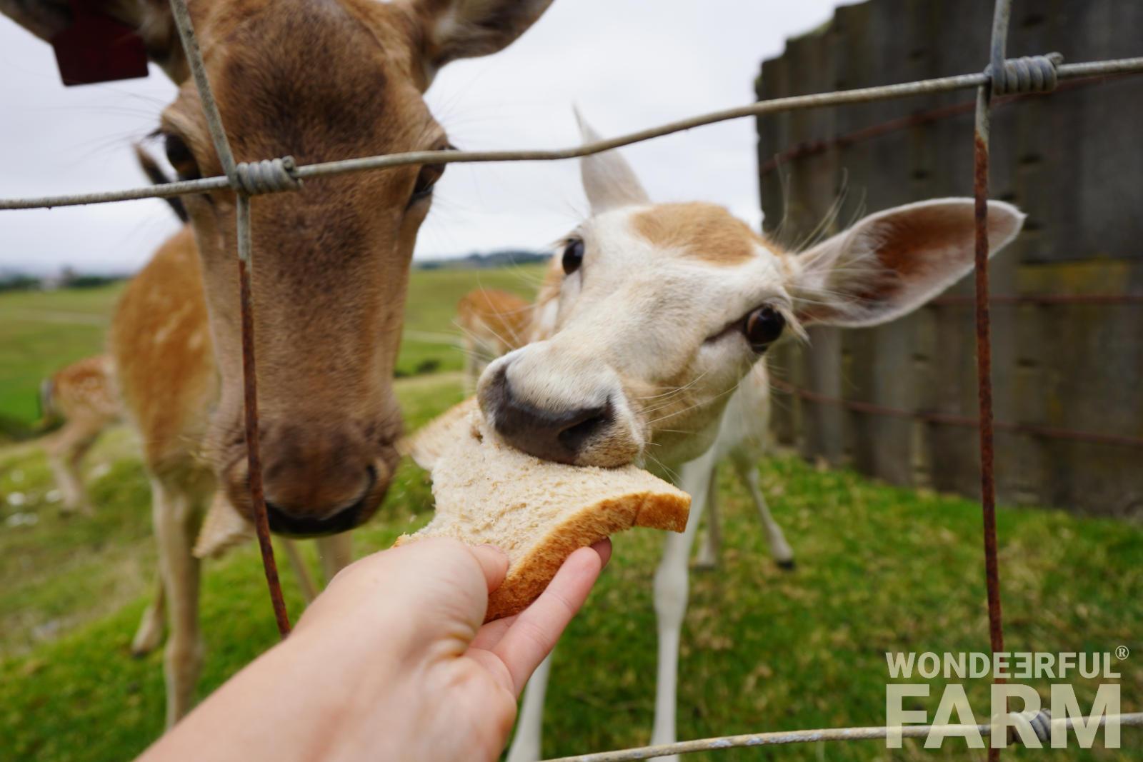 Анималотерапия — общение с представителями животного мира